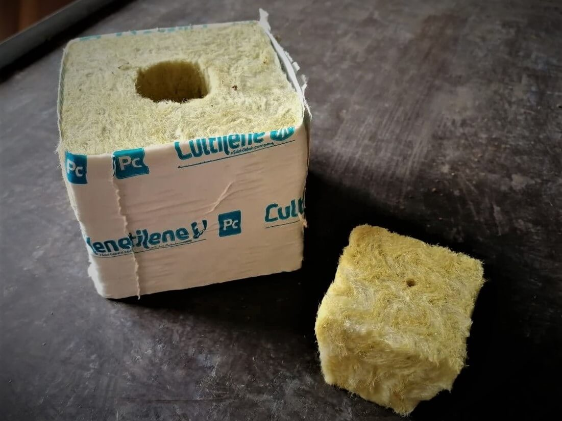 Steinwollwürfel und kleiner Keil als Substrat zur Keimung von Hanfsamen