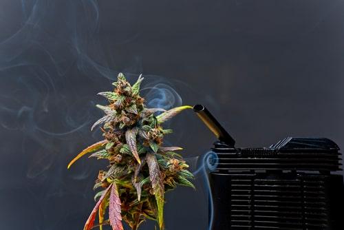 Cannabis-CBD-Vaporizer