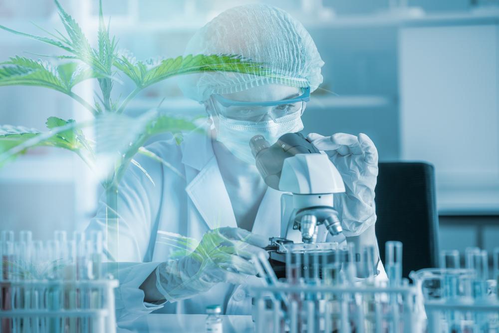 CBD im Labor für klinische Studien