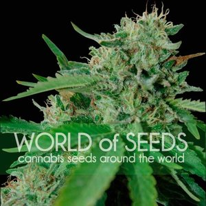 World of Seeds Brazil Amazonia Hanfsamen