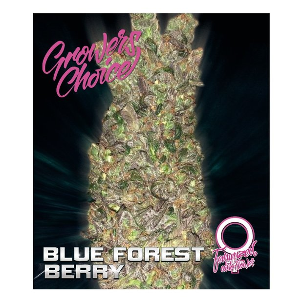 Growers Choice Auto Blue Forrest Berry