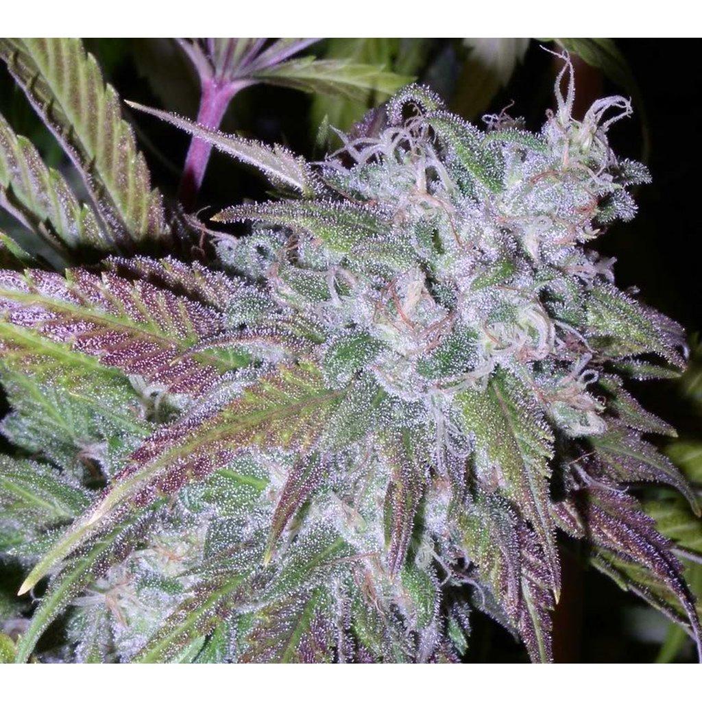 Кристаллики на конопле семена марихуаны в новосибирске
