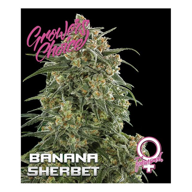 Growers Choice Banana Sherbet