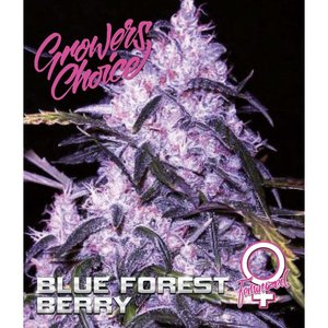 Growers Choice Blue Forest Berry