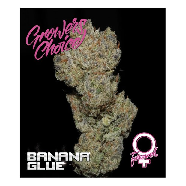 Growers Choice Banana Glue
